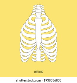 Rib cage anatomy, labeled vector illustration diagram.