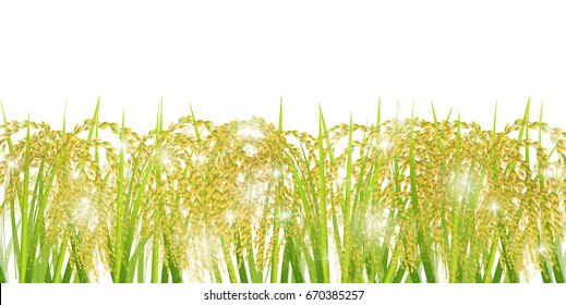 Rice autumn landscape background