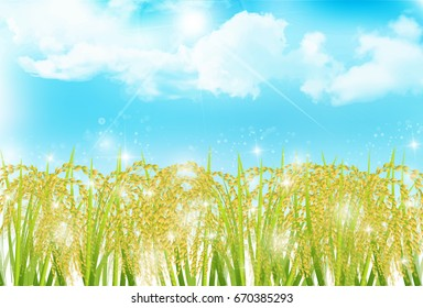 Rice autumn landscape background