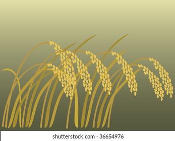 rice in autumn vectorillustration