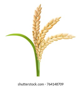 Rice ear realistic vector illustration