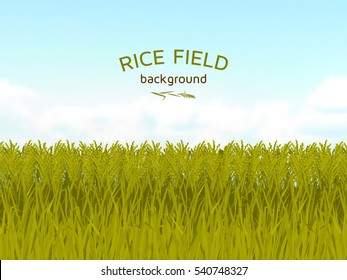 Rice field and blue sky background.  Colorful vector illustration.