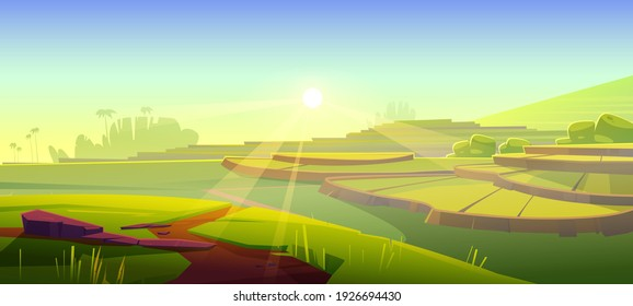 Rice field terraces, green paddy at morning. Vector cartoon illustration of summer landscape with crop plantation on hills at sunrise. Asian terraced farmland and sun rays