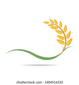 Rice on white and text, agricultural vector illustration