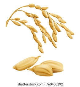 Rice - Oryza Hand drawn vector illustration of golden yellow rice ear on transparent background in highly detailed realistic stile.