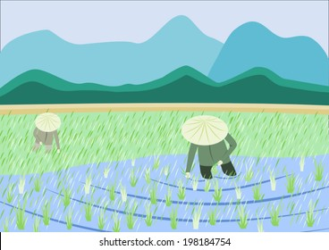 Rice plantation with two workers and mountains at eh background
