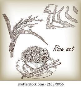 Rice set. Plant of rice, rice porridge, rice field, hand draw