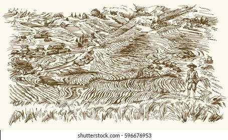 Rice terraces of Longsheng. Hand drawn illustration.