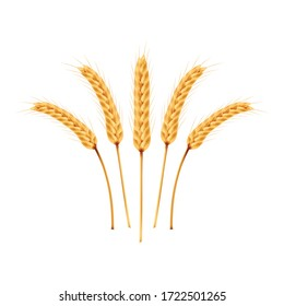 Rice vector on white background. oat vector. wallpaper. free space for text. copy space.