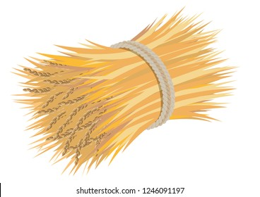 Rice-sheaf is tied with rope