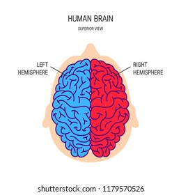 Right and left hemispheres of a brain, vector illustration