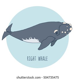 Right whale vector illustration. Hand drawn, isolated on white and blue background.