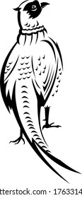 Ring-Necked Pheasant or Common Pheasant Viewed from Rear Retro Black and White