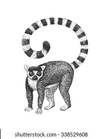 Ring-Tailed Lemur - Classic Drawn Ink Illustration Isolated on White Background