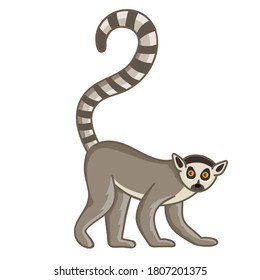 Ring-tailed lemur. Isolated wild ape with long striped tail. Cute primate mammal cartoon character icon. Vector wildlife exotic ring-tailed lemur monkey animal
