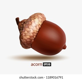 Ripe acorn isolated on white background, realistic acorn, oak, autumn fruit, symbol of autumn. 3d illustrator illustration. EPS10