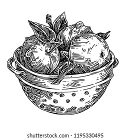 Ripe apples in colander. Sketch. Engraving style. Vector illustration.