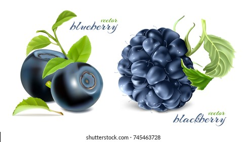 Ripe berries. Blueberries and blackberry with leaves. Vector illustration.