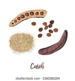 Ripe carob sweet pods whole and halved, seeds and carob powder on the white background. vector illustration