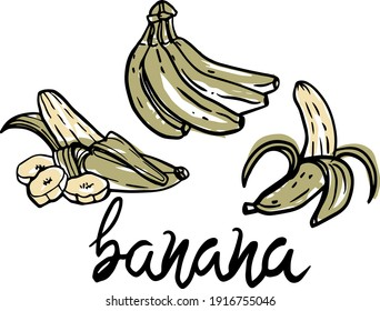 Ripe cluster banana peeled slices isolated on white background. Banana sketch vector illustration set