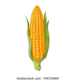 Ripe corn cob with leaves. Ear of corn. Hand drawn vector illustration isolated on white background.