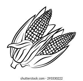 Ripe corn on the cob