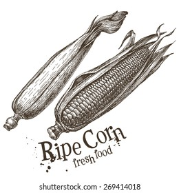 ripe corn vector logo design template. fresh vegetables, food or popcorn icon.
