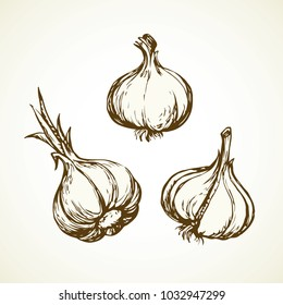 Ripe dry eco Allium sativum fruitful isolated on grey backdrop. Freehand linear black ink hand drawn picture logo sketchy in art scribble graphic style pen on paper. Closeup view with space for text