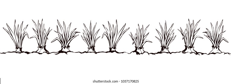 Ripe eco raw fresh green bulb leek fruit isolated on white sky backdrop. Freehand line black ink hand drawn botany herbal farmer border sketch in retro art doodle cartoon style with space for text