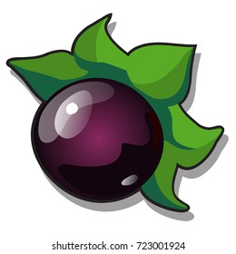 Ripe fruit of Atropa belladonna or deadly nightshade, perennial herbaceous plant in nightshade family Solanaceae isolated on white background. Ancient cosmetics. Vector cartoon close-up illustration.