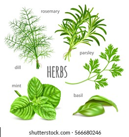 Ripe green herbs. Collection of herbs vector illustration.