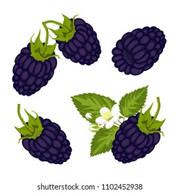 Ripe juicy berries of blackberry with leaves and flowers. Vector image.