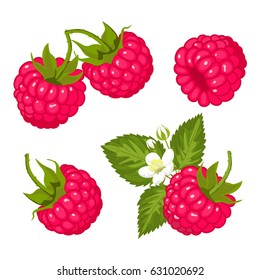 Ripe juicy berries of raspberry with leaves and flowers. Vector image.