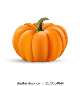 Ripe orange pumpkin vector illustration