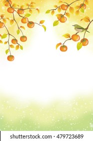ripe persimmons on trees