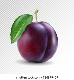 Ripe plum with green leaves on transparent background. Quality photo-realistic vector illustration of plum fruit