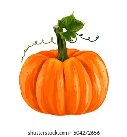ripe pumpkin. autumn pumpkin harvest. orange pumpkin on a white background. vector illustration.