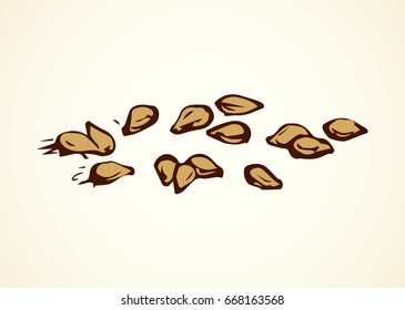 Ripe raw tasty salted fat nutty brown til herb product on white backdrop. Freehand linear dark ink hand drawn picture sign sketchy in art retro scribble graphic style pen on paper. Closeup macro view