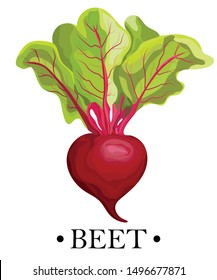 Ripe red beets with green leaves. Card, banner, sticker, poster, print. Vector illustration.
