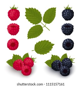 Ripe red raspberries and blackberries with green leaves on a white background. Set of colorful icons. Design for a label, banner, poster. Vector illustration.