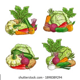 Ripe vegetables and greenery food sketch. Farming agriculture harvest. Pattypan squash, kohlrabi and zucchini, onion, carrot and beetroot, pepper, potato and cucumber, leek, Chinese cabbage vector