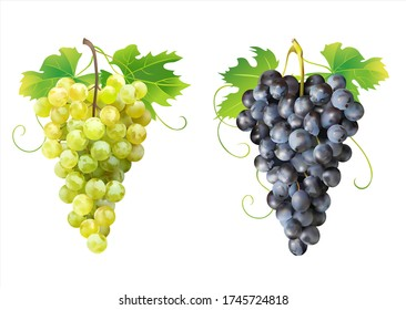 Ripe white and dark grapes isolated. Vector illustration.