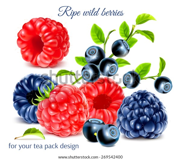 Ripe Wild Berries Your Tea Pack Stock Vector (Royalty Free