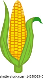 Ripe yellow corn ear with green husk isolated on white background