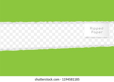 Ripped paper design element. Two horizontal green borders on the trancparent background