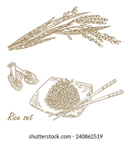 Rise set. Hand drawn vector illustration rice plant, rice porridge in sketch style