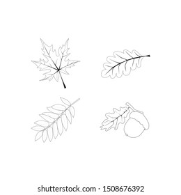 осенние листья, желудь, осень, лес, дуб, кленовый лист, risunok list'yev  leaf pattern, vector chandelier isolated on white background. autumn leaves. fall. linear drawing. thin line. flapper icon
