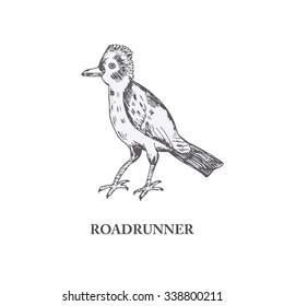 roadrunner, hand draw bird