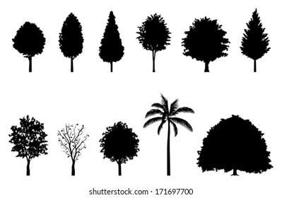 Roadside tree / Silhouette