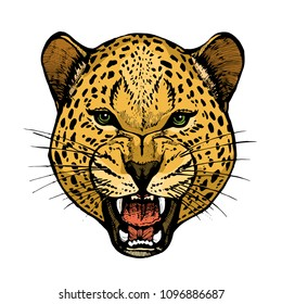 Roaring leopard head with bared teeth animal portrait colorful hand drawn vector illustration isolated on white background design for tattoo and poster